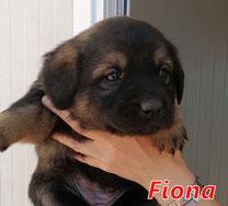 Fiona 2 - Reg. Lanusei - geb. ca. 03/2021