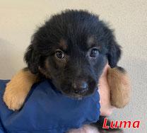 Luma - Region Lanusei - geb. 11/2020
