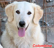 Colombina - geb. 02/2019