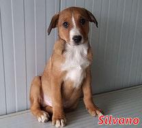 Silvano - geb. 10/2020