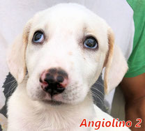 Angiolino 2 - geb. 07/2020