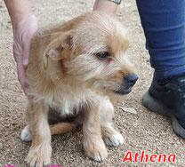 Athena - Region Lanusei - geb. 06/2020