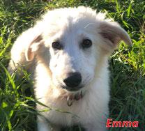 Emma (f) - Arca Sarda - geb. 07/2020