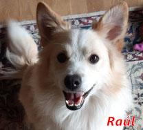 Raúl - geb. ca. 01/2020