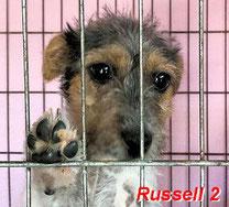 Russell 2 . geb. 03/2019