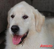Amleto - geb. 01/2008