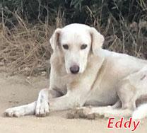 Eddy (m) - Arca Sarda - geb. 08/2016