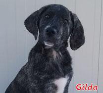 Gilda - geb. 01/2020