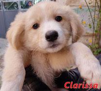 Clarissa - Region Lanusei - geb. 01/2021