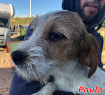 Paula - geb. 10/2019