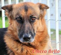 Chicca Bella - geb. 01/2016