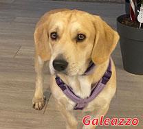 Galeazzo - geb.  05/2018