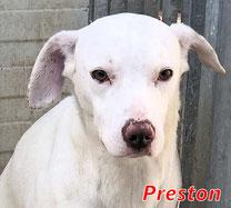 Preston (Pontarelli R3) - geb. 06/2021