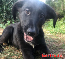 Gertrude (f) - Arca Sarda - geb. 08/2020