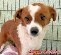 Bocca di Rosa - geb. 01/2020