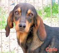 Carlo (m) - Arca Sarda - geb. 04/2019