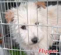 Flipper - geb. 01/2007