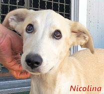 Nicolina - geb. 02/2020