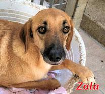 Zola - geb.  03/2015