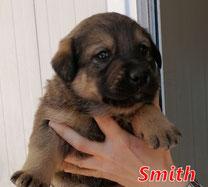 Smith - Region Lanusei - geb. 03/2021