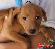 Prisca - geb. 01/2021