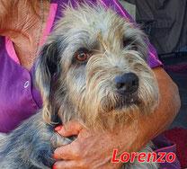 Lorenzo - geb. ca. 2020