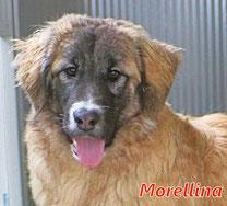 Morellina - Region Lanusei - geb. 08/2021