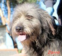 Zorro - geb. folgt