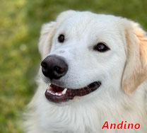 Andino - geb. 05/2020