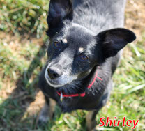Shirley - Region Lanusei - geb. 01/2010