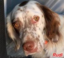 Rudi - geb. 01/2018