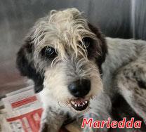 Mariedda - geb. 01/2010