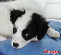 Pongo - Region Lanusei - geb. 12/2019