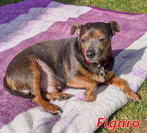 Figaro - Region Lanusei - geb. ca. 2013