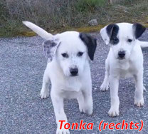 Tonka - geb. ca. 12/2020
