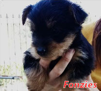Fonzies - Region Lanusei - geb. 12/2020