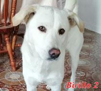 Birillo 2 - Region Lanusei - geb. ca. 2014