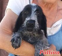 Pallina (Mädel 4) - geb. 05/2020