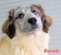 Bovale - Region Lanusei - geb. 08/2021
