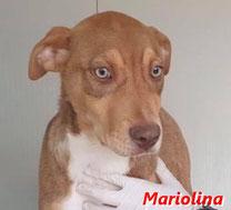 Mariolina - geb. 09/2019
