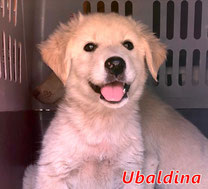 Ubaldina - geb. ca. 08/2020