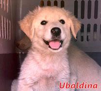 Ubaldina - geb. 07/2020
