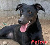 Palma - Region Lanusei - geb. 04/2021