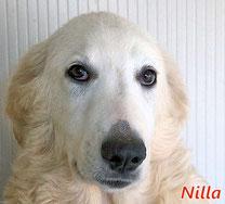 Nilla - geb. 07/2019