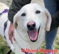 Albina Bianca - geb. 06/2016