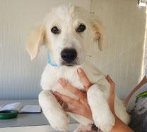 Pentu wurde adoptiert... wegen seines Handicaps werden wir teilweise weiter für tierärztliche Folgekosten aufkommen