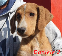 Daniele 2 - geb. 04/2020