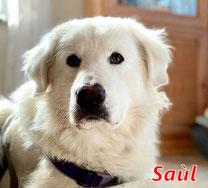 Saul - I Salini (R1) - geb. 03/2021