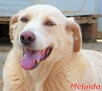 Melinda - geb. 09/2013