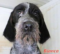 Bianca (8 Welpen) - geb. ca. 06/2021